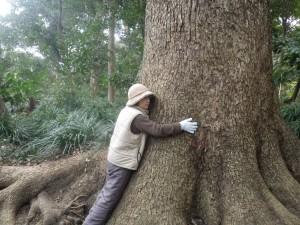 宇和島城の大木